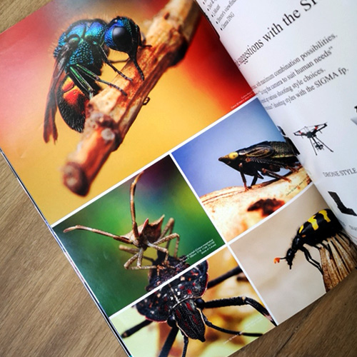 Macrophotos of Christian Brockes in Insects Magazine Chiiz