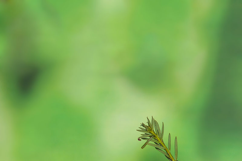 Winzige Araniella Spinne mit Canon 70-200 bei 200mm