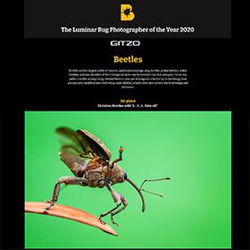 Winning Image Beetle Category Luminat Bug Photographer of the Year 2020